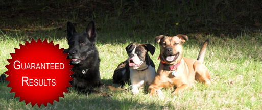 Dog Training Classes Puyallup
